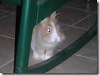 טובי מתחבא מאחורי הכורסא